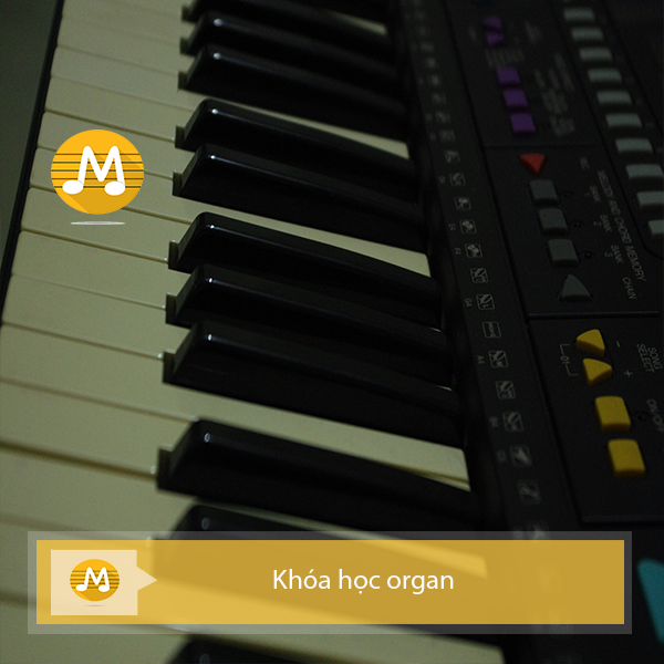 khóa học organ